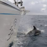 Calypso ontmoet dolfijnen